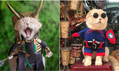 Catvengers Spotted In Vietnam, Searching For Cathanos Secret Hideout Maybe? - WORLD OF BUZZ 1