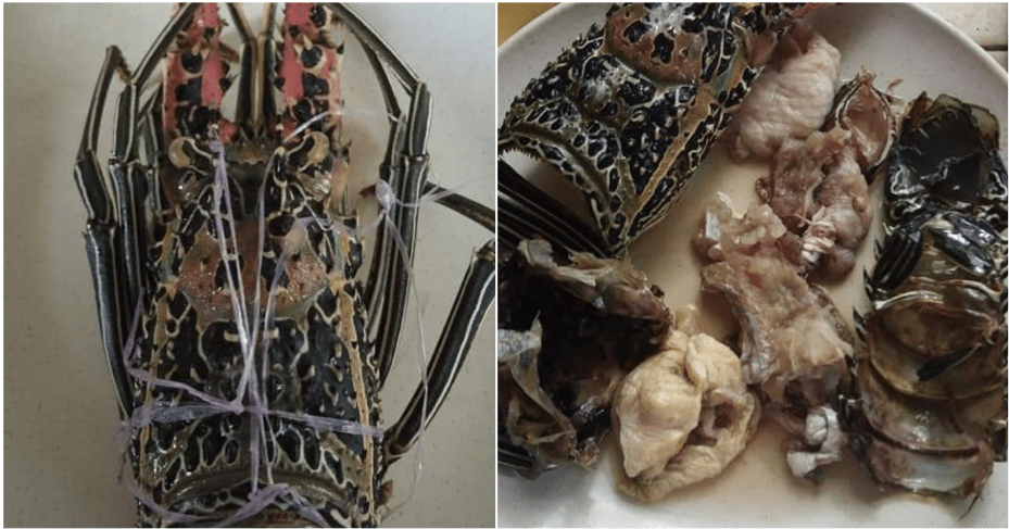 Fake Lobster Containing Chicken And Fish Found In Semporna, Sabah - WORLD OF BUZZ 2