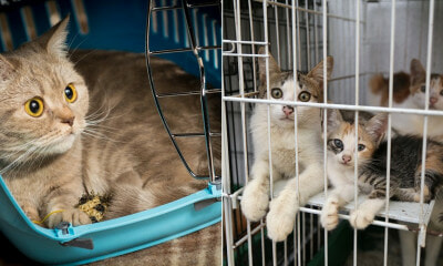 Scientists Advise to Keep Pet Cats Indoors To Avoid Contracting Infectious Disease - WORLD OF BUZZ