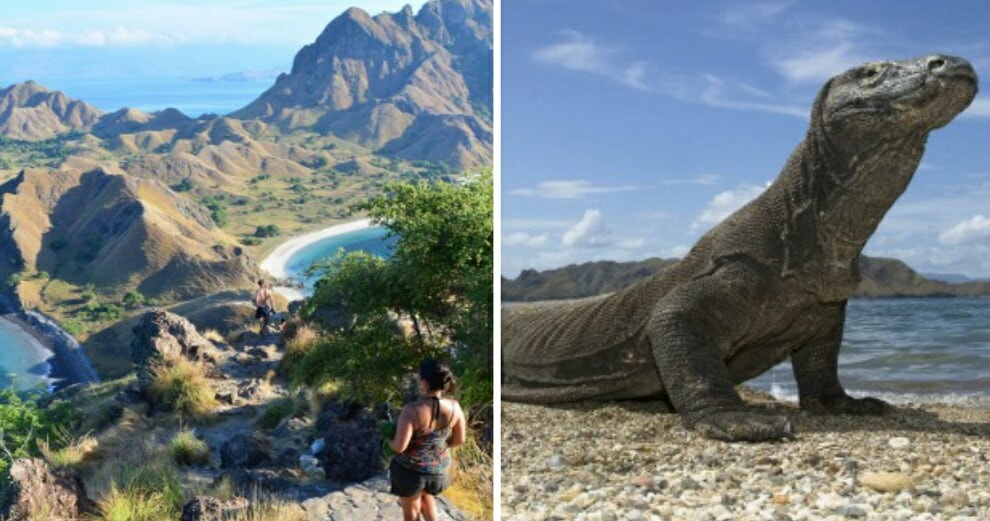 This Popular Indonesian Island Will Be Closed to Tourists For A Year Because People Are Smuggling Its Komodo Dragons on FB - WORLD OF BUZZ