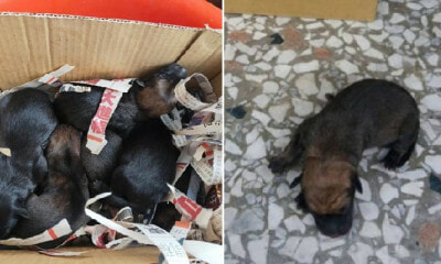 Six Newborn Puppies Were Put Inside a Plastic Bag & Flung Into a Drain By Cruel Owner - WORLD OF BUZZ 6