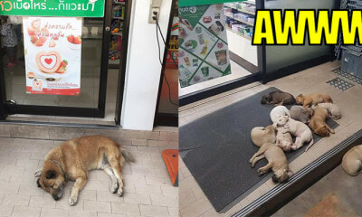Stray Cats and Dogs Allowed by Kind 7-Eleven Staff to Enjoy Air-Con During Heatwave - WORLD OF BUZZ