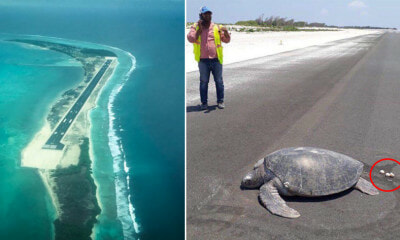 Endangered Turtle Lays Eggs on Airport Runway Built Right in the Middle of a Beach - WORLD OF BUZZ