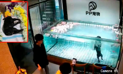 Video: Bulldog Tragically Drowned In Pet Shop Pool While Owner Was Recording - WORLD OF BUZZ 1