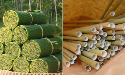 Vietnamese Youngster Makes Bio-Degradable Straws Made Out of Wild Grass & Sells Them Too - WORLD OF BUZZ