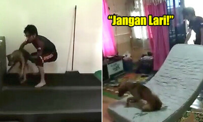 3 UiTM Students Hilariously Try to Move a Stray Dog Without Harming It In Viral Video - WORLD OF BUZZ