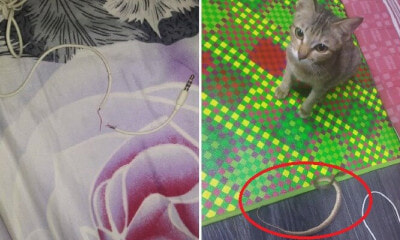 Cute Cat Bites & Spoil Owner's Earphones, Brings Back Snake As Replacement Gift - WORLD OF BUZZ 4