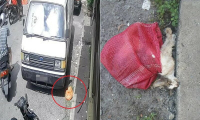 Motorcyclist Heartlessly Dumps Disable Cat Near A Shop In Selayang Jaya, Leaving It To Die - World Of Buzz