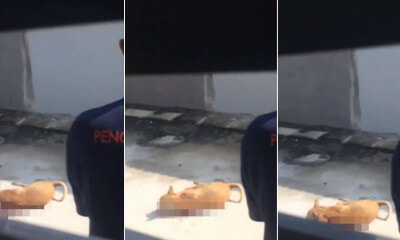 Video Shows Ipoh Council Worker Shooting a Stray Dog As Resident Begged Him to Stop - WORLD OF BUZZ