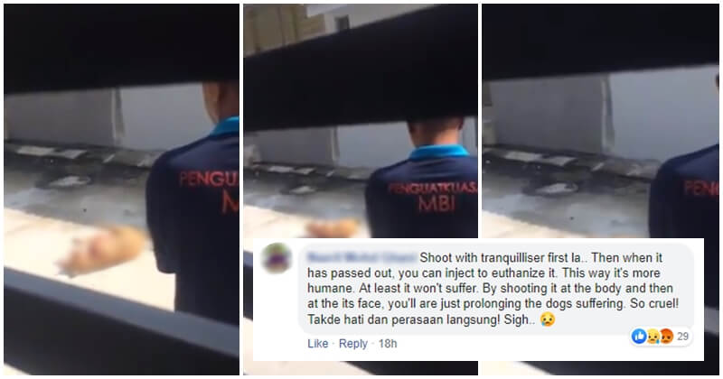 Ipoh City Council Defends Dog Murderer, Stating That It Was Done According To Law - World Of Buzz 5
