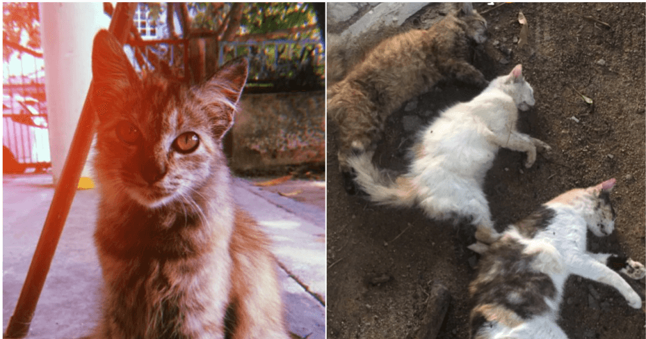 Man Shares Grief After Finding 3 Beloved Cats Cruelly Poisoned - WORLD OF BUZZ 1