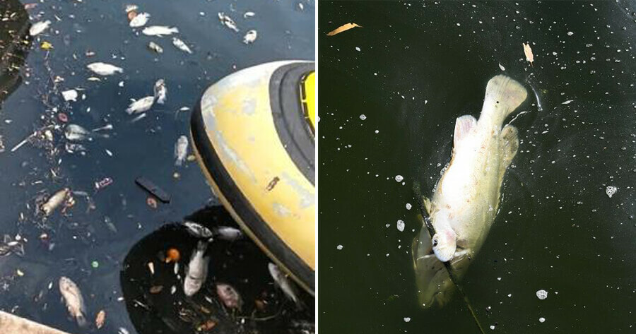 Pollution From Industrial Discharge Causes Melaka River To - World Of Buzz