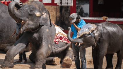 Real Life Dumbo Bites The Dust Due To Thai Zoo's 'Care' And 'Treatment' - WORLD OF BUZZ 2