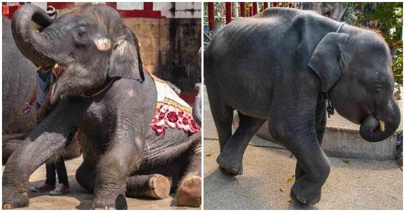 Real Life Dumbo Bites The Dust Due To Thai Zoo's 'Care' And 'Treatment' - WORLD OF BUZZ 5