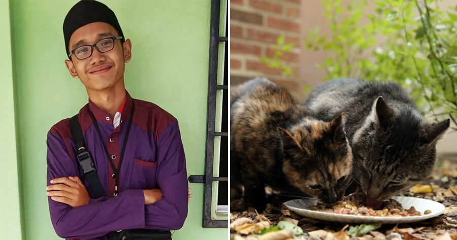 17yo Boy Who Feeds Stray Cats Every Day Dies in Accident On The Way to Feed Them - WORLD OF BUZZ