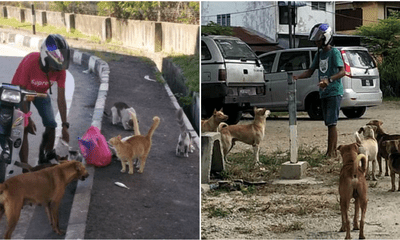 This Malay Man Spends More Than Half Of His Salary To Feed Stray Dogs And Cats - WORLD OF BUZZ 3