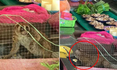 Protected Live Animals & Slaughtered Wildlife Found Being Sold by Traders in Sarawak - WORLD OF BUZZ