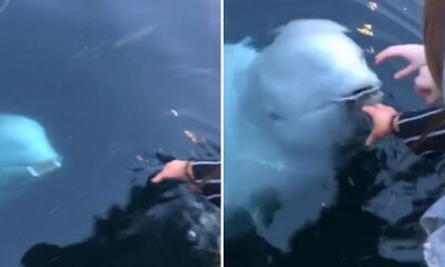 Woman Drops Her Phone in The Sea, But Adorable Whale Swims to Surface & Returns it to Her - WORLD OF BUZZ 2