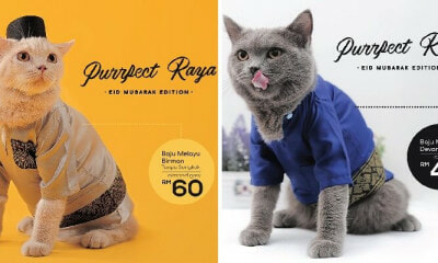 You Can Actually Get Cute Baju Raya For Your Cats Including Songkok at This Malaysian Shop! - WORLD OF BUZZ 8