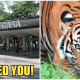 Zoo Negara: We Desperately Need More Visitors And Sponsors For The Animals - WORLD OF BUZZ
