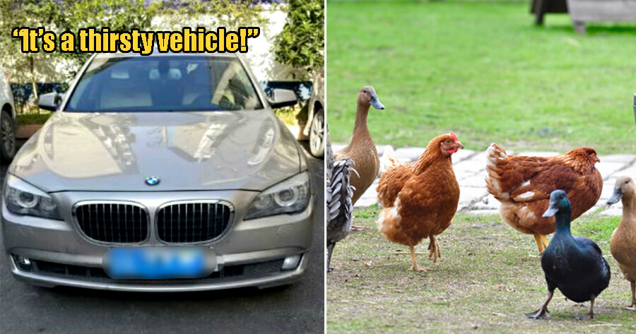 Farmer Steals Chickens & Ducks To Raise Money For Gas After Purchasing Rm1.2 Mil Bmw - World Of Buzz