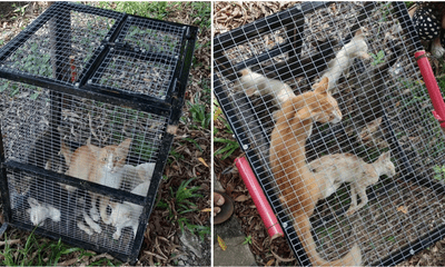 Man Leaves Cats In A Cage Under The Sun To Die, Demands RM60 For The Cage When The Cats Are About To Be Saved - WORLD OF BUZZ 4