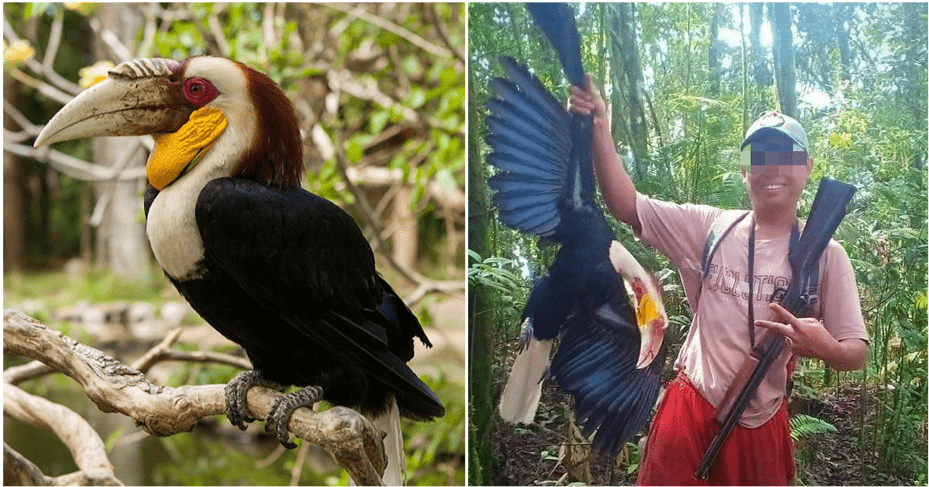 Man Who Proudly Killed Endangered Hornbill Will Be Sentenced Up To 5 Years In Jail - World Of Buzz 3
