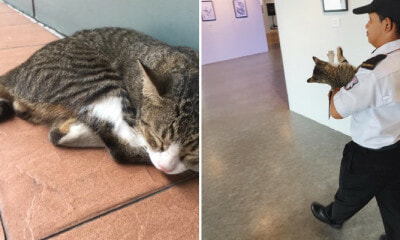 PJ Uni Security Guard Interrupts Cute Campus Cat, HotDog, From Enjoying Art Exhibition - WORLD OF BUZZ 6