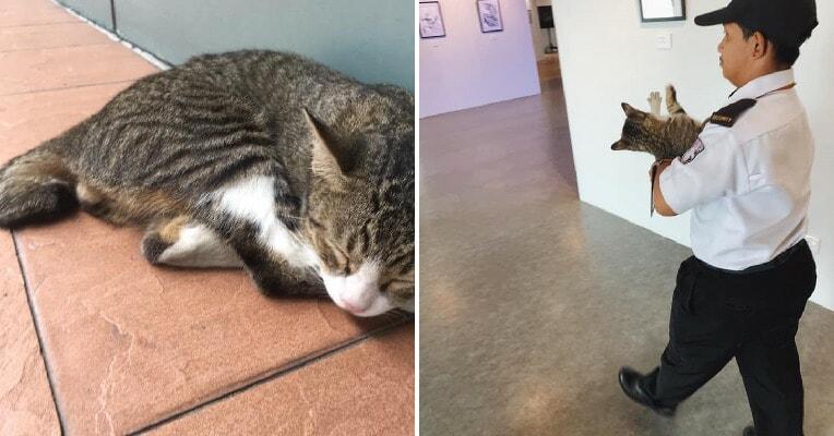 Pj Uni Security Guard Interrupts Cute Campus Cat, Hotdog, From Enjoying Art Exhibition - World Of Buzz 6