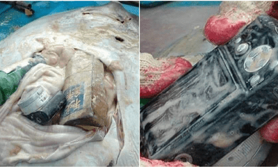 Stingray Found Dead With Stomach Containing A Book, A Camera And A Bottle. - WORLD OF BUZZ 6