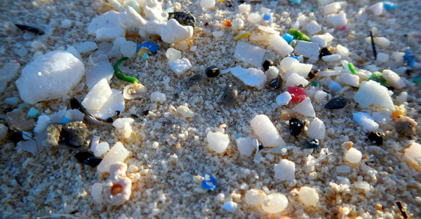 Study: We Consume An Average of 5 Grams Of Plastic A Week, The Same Weight As One Credit Card - WORLD OF BUZZ 2