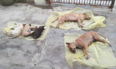 Two Dogs & Three Puppies Found Foaming at the Mouth in Ipoh, Suspected to Be Poisoned to Death - WORLD OF BUZZ 2