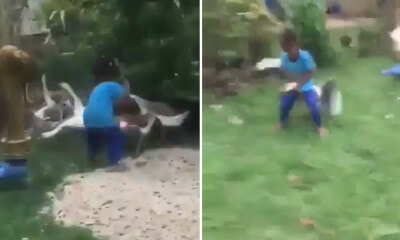 Video of Brave Little Boy Having a Smack Down with Fierce Goose Goes Viral, Netizens Amused - WORLD OF BUZZ 1