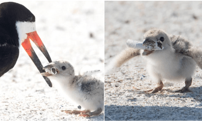 Woman Captured Worrying Photos Of A Mother Bird Feeding Its Chick A Cigarette Butt - WORLD OF BUZZ 3
