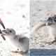 Woman Captured Worrying Photos Of A Mother Bird Feeding Its Chick A Cigarette Butt - WORLD OF BUZZ 3