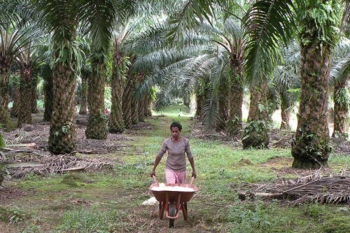 3 Indian Men Chained and Forced Labour After Being Promised With Job at an Oil Palm Plantation - WORLD OF BUZZ