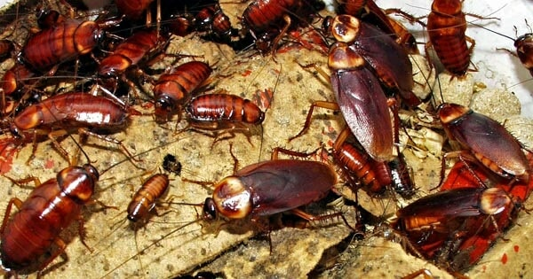 ATTENTION! Cockroaches Might Be Invading Us In The Near Future - WORLD OF BUZZ