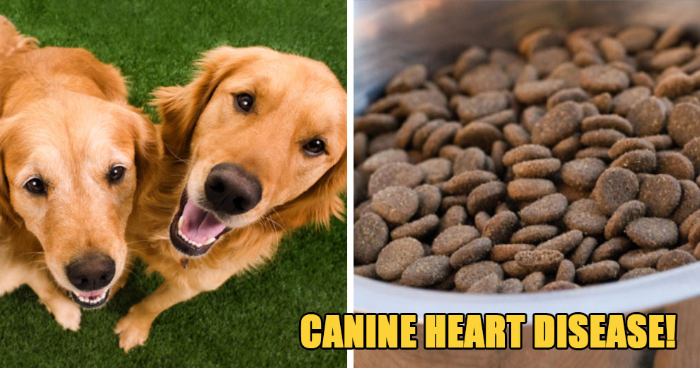 Beware: These 16 Dog Food Brands Have Been Linked to Canine Heart Disease - WORLD OF BUZZ 5