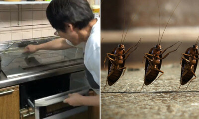 Woman Taps Chopsticks & Bangs Stove to Get Cockroach Out but Makes - WORLD OF BUZZ