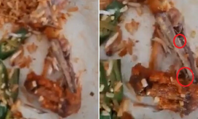 Customers in PD Mamak Grossed Out By Live Maggots Inside Fried Chicken After They Finished Eating - WORLD OF BUZZ 3