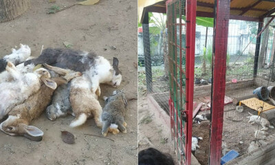 M'sian Teachers Find Pet Rabbits Dead In Tadika's Mini-Farm & One Even Had Its Ears Cut Off - WORLD OF BUZZ