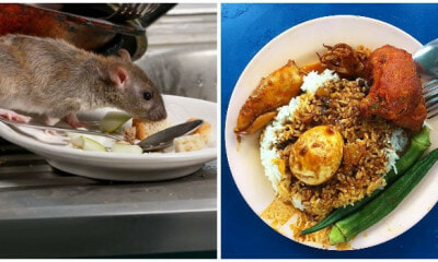 Famous Penang Briyani Restaurant Shut Down After Authorities Find Rat Poop and Dead Lizards in Kitchen - WORLD OF BUZZ 3