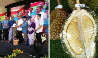 Johor Man Creates New Durian Variety, Judges Say It's Better Than Musang King - WORLD OF BUZZ