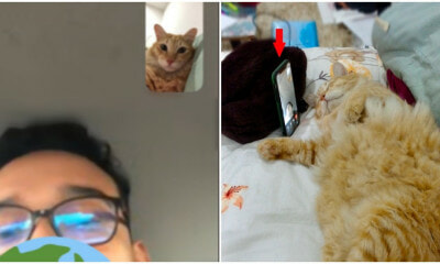 M'sian Woman's Cat Helps Owner To Video Call BF While He Was In A Traffic Jam - WORLD OF BUZZ 5