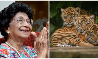 Tun Dr Siti Hasmah Names Adorable Tiger Cubs in Zoo Negara Wira, Hebat and Melur - WORLD OF BUZZ