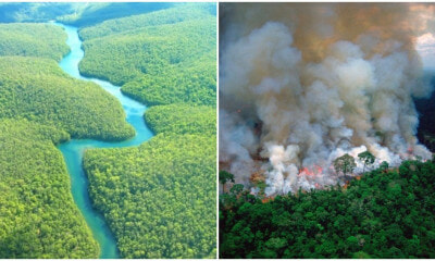 Did You Know The Amazon Has Been Burning for 3 Weeks & We Could Lose 20% of Oxygen in the World? - WORLD OF BUZZ