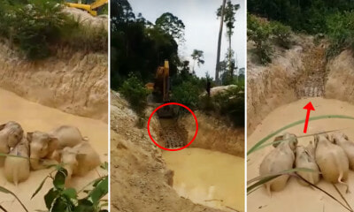 Five Elephants Were Rescued After Getting Stuck in a Gold Mine in Pahang - WORLD OF BUZZ