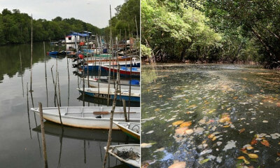 Another Johor River Becomes Black & Stinky Due To Toxic Waste Dumped By Nearby Factories - WORLD OF BUZZ