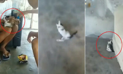 Teens Go Viral For Feeding Alcohol To Helpless Kitten In Instagram Video - WORLD OF BUZZ