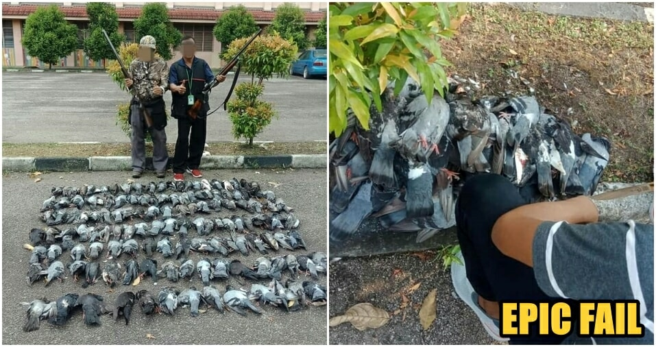 Johor Local Gov't Thought They Shot 100 Crows, But They Killed Pigeons Instead! - WORLD OF BUZZ 1